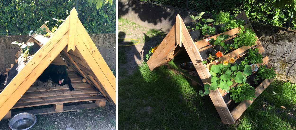 Tuto : Fabriquez une super niche avec un toit végétal en palette