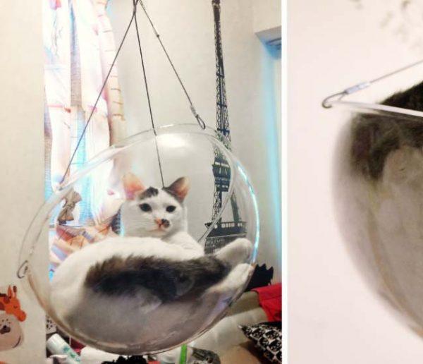 Voici le panier idéal pour que votre chat regarde le monde d'en haut... et vous amuse