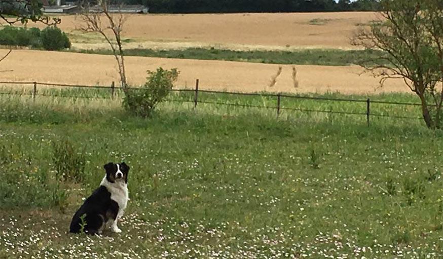 Vue sur le paysage près de Contres en Loir-et-Cher, le 25 juin