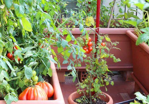 Comment Cultiver Des Fruits Et Legumes En Permaculture Sur