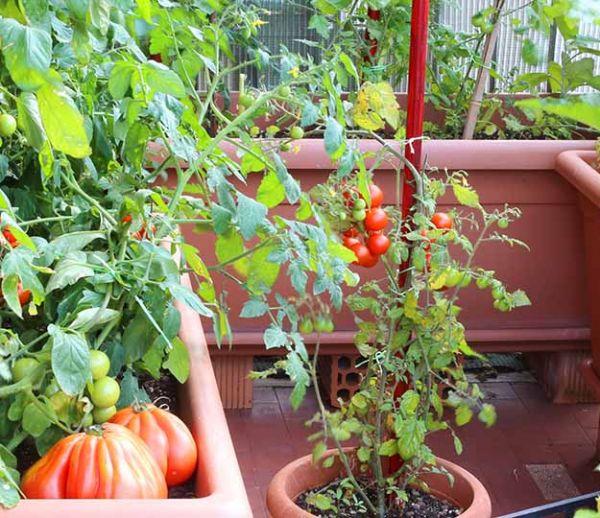 Un potager en permaculture sur votre balcon, c'est possible !