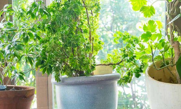 Vacances : 10 conseils pour que vos plantes résistent à votre absence