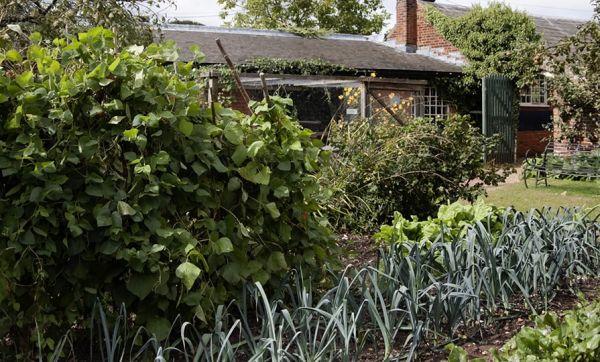 Calendrier du potager : Que semer, planter et récolter en juillet ?