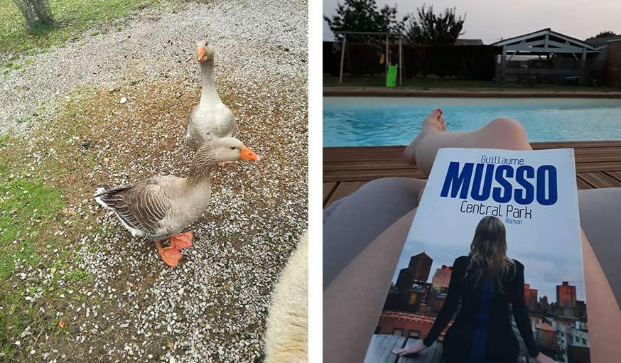 Deux oies dans le jardin au pied des Cévennes dans le Gard (à gauche), et moment lecture à la piscine près de Cadillac en Gironde (à droite).