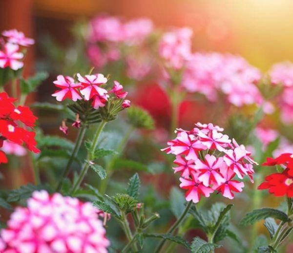 16 plantes pour éloigner les moustiques de manière écolo