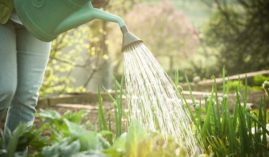 Jardiner au potager en juillet plantations semis r colte et conseils de jardinage - Quoi planter en juillet ...