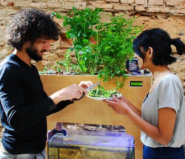 Aquapioneers : un potager aquaponique en open source pour tout faire pousser à la maison