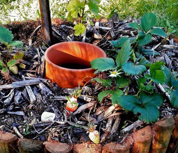 Découvrez les Oyas, ces jarres qui arrosent votre jardin toutes seules et économisent l'eau