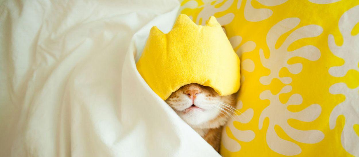 5 méthodes surprenantes et imparables pour trouver le sommeil rapidement
