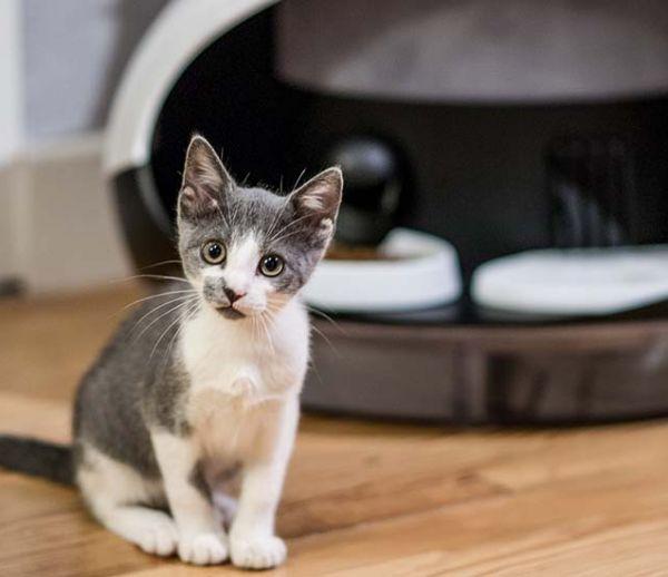 Et si votre chat était nourri par un distributeur connecté ?
