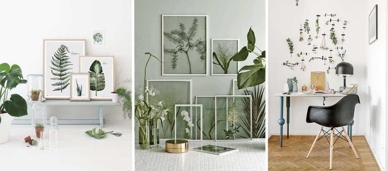 Tendance déco : l'herbier fait son grand retour, mais cette fois-ci sur les murs !