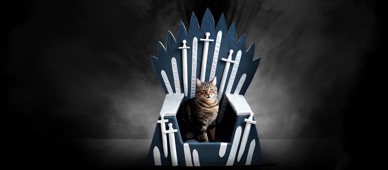 Votre chat aussi a le droit d'être fan de Game of Thrones !