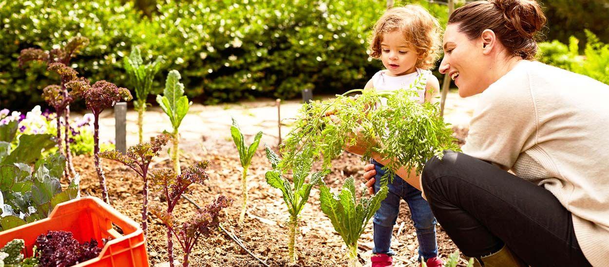 9 astuces écolos pour cultiver votre potager sans glyphosate et autres pesticides