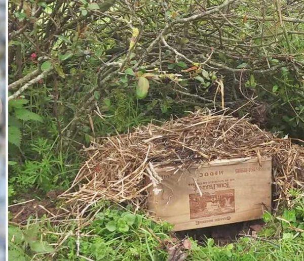 Tuto : deux idées pour fabriquer un petit abri et accueillir les hérissons du jardin