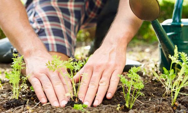 Oasis Citadine : ce jardinier passionné va faire découvrir la permaculture aux urbains