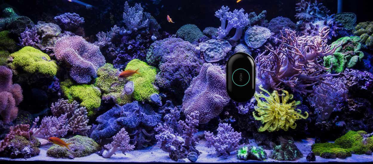 Ce robot intelligent s'occupe d'entretenir votre aquarium