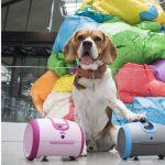 Ugo, télécommande universelle connectée, et Laïka, robot compagnon pour chien.