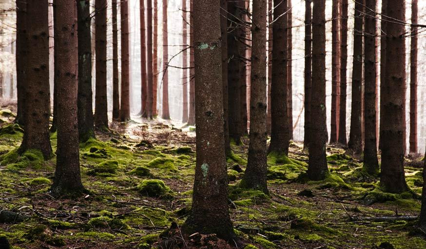 Forêt d'Ardenne