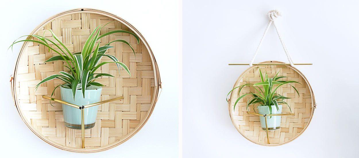 Tuto : Transformez un panier vapeur en joli terrarium