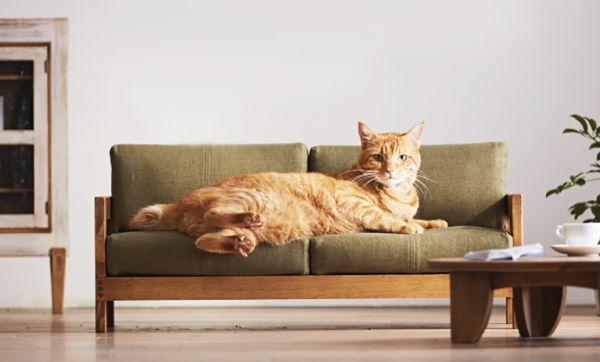 Des mini meubles adorables pour que votre chat arrête de vous piquer toute la place