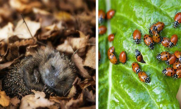 14 solutions naturelles et très efficaces pour se débarrasser des insectes nuisibles du jardin