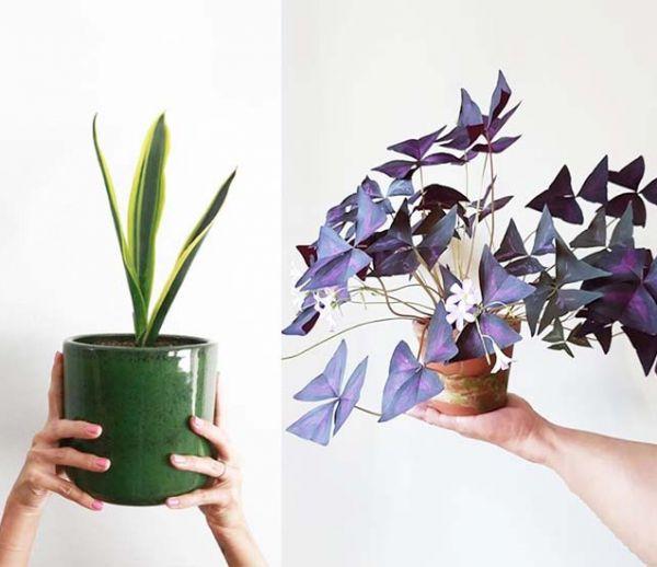 Voici les 7 plantes d'intérieur tendance de l'automne-hiver à adopter d'urgence