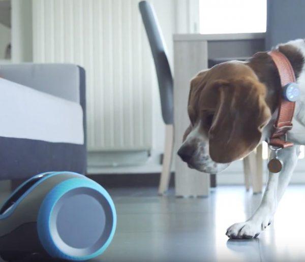 Grâce à ce robot nommé Laïka votre chien ne sera plus jamais seul