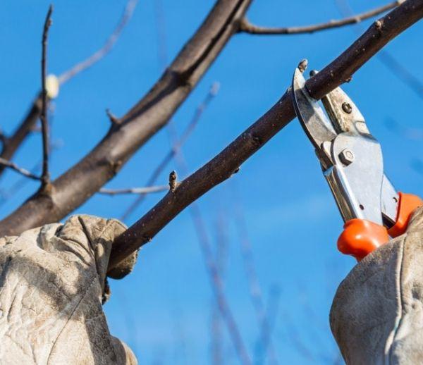 C'est le moment de tailler vos arbres avant l'hiver : on vous dit lesquels et comment