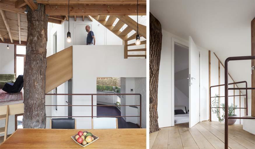 Un arbre dans la maison cette maison est construite - Maison contemporaine construite autour dun arbre ...
