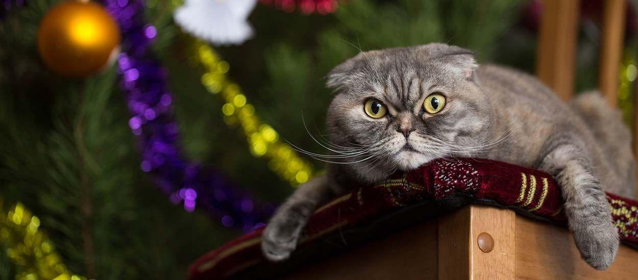 14 idées pour empêcher votre chat de détruire votre sapin de Noël