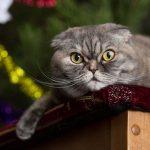 Ce chat a des projets et ils ne vont pas vous plaire.