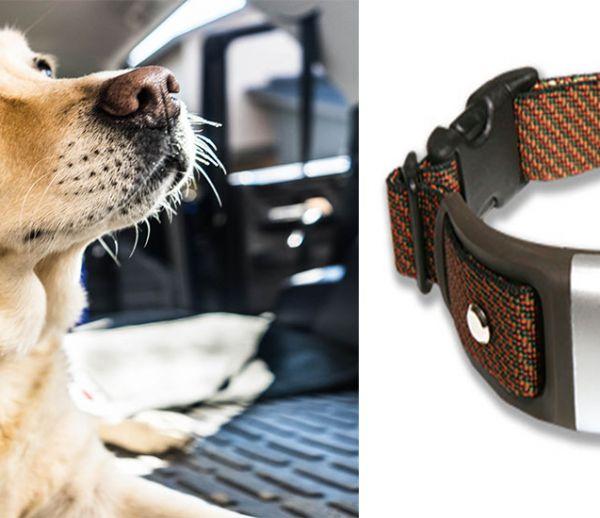 Ce collier connecté surveille la santé de votre chien