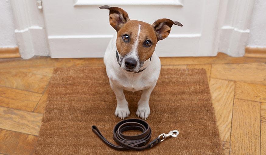 conseils de deux comportementalistes canins pour rendre votre chien propre. Black Bedroom Furniture Sets. Home Design Ideas