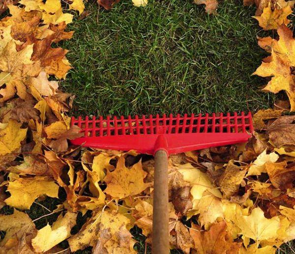 5 astuces pour recycler les feuilles mortes du jardin en automne