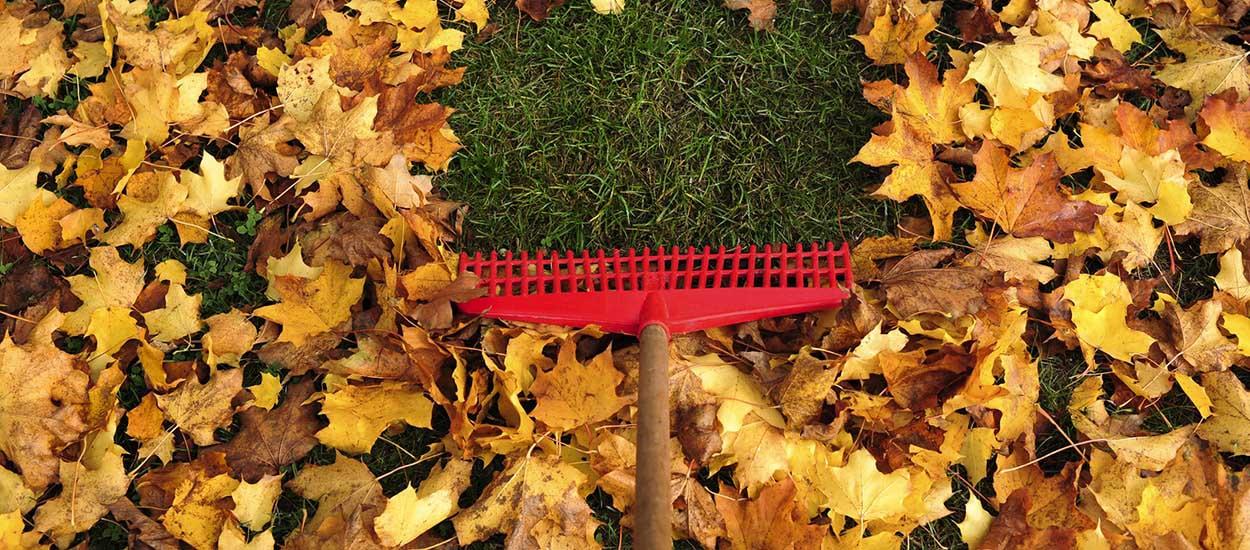 que faire de ses feuilles en automne 5 conseils pour recycler les feuilles mortes. Black Bedroom Furniture Sets. Home Design Ideas