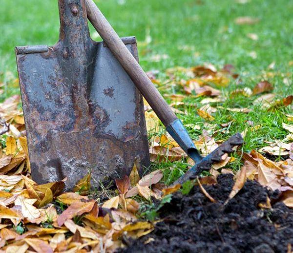 Que planter dans votre jardin à la Sainte-Catherine ?