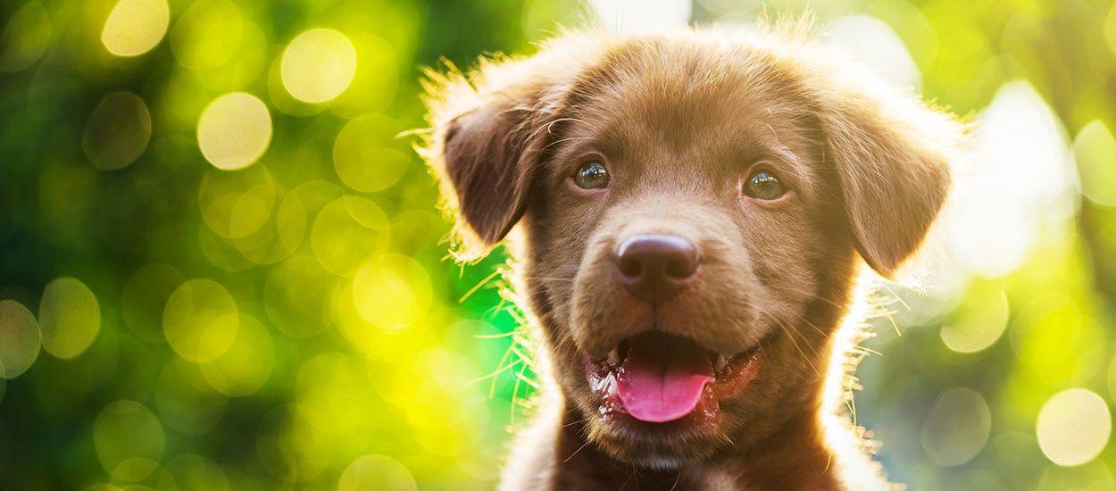 Conseils De Deux Comportementalistes Canins Pour Rendre Votre Chien Propre 18h39 Fr