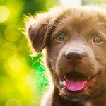 Des conseils pour apprendre à votre chien à devenir propre.