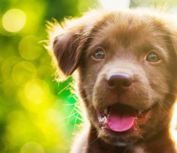 Avec ces conseils votre chien ne fera plus pipi partout dans la maison