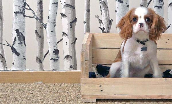 panier pour chien 18h39. Black Bedroom Furniture Sets. Home Design Ideas
