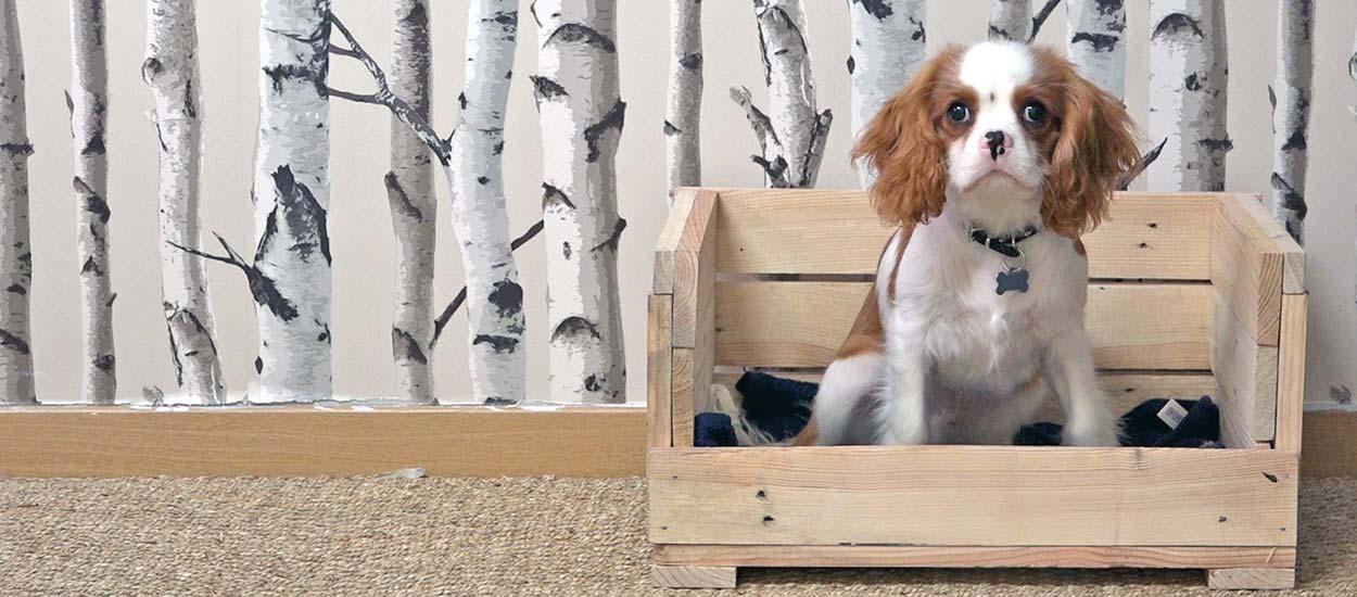 diy pour fabriquer une petite corbeille pour chien en palette lit pour chien. Black Bedroom Furniture Sets. Home Design Ideas