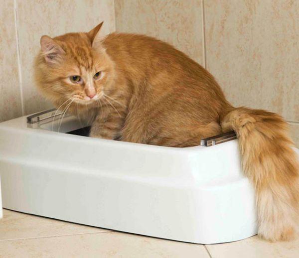Cette litière pour chats et chiens tire (littéralement) la chasse derrière eux !