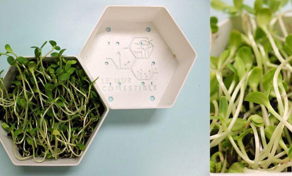 Vous pouvez désormais manger les murs de votre maison !