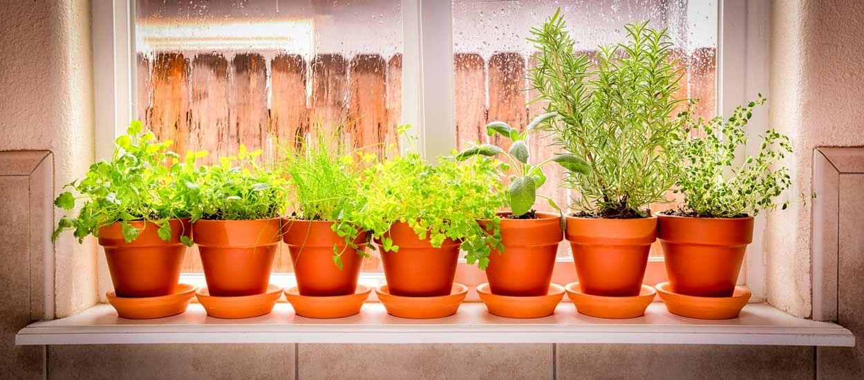 comment faire pour que les plantes d 39 ext rieur survivent l 39 int rieur. Black Bedroom Furniture Sets. Home Design Ideas