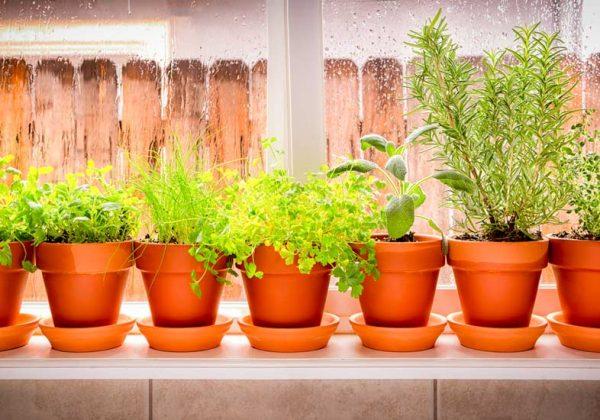 Comment Faire Pour Que Les Plantes Dextérieur Survivent à L