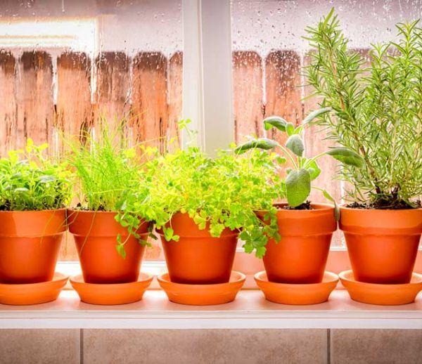 Le froid arrive : 5 conseils pour rentrer vos plantes d'extérieur