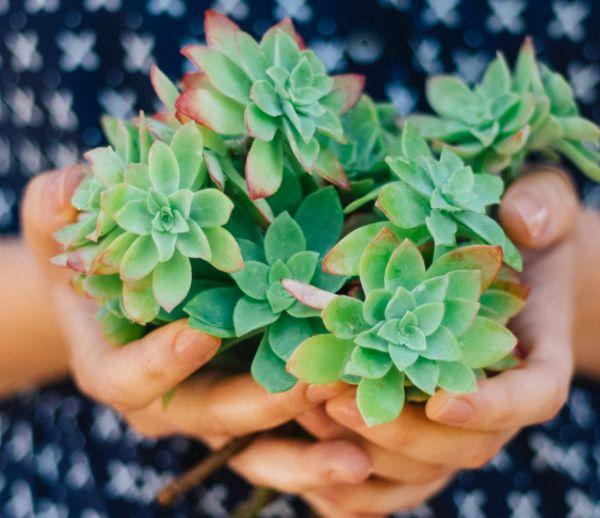 5 plantes d'intérieur increvables pour celles et ceux qui n'ont pas la main verte