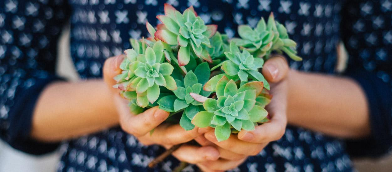 5 plantes d 39 int rieur increvables pour jardiniers for Plantes d interieures