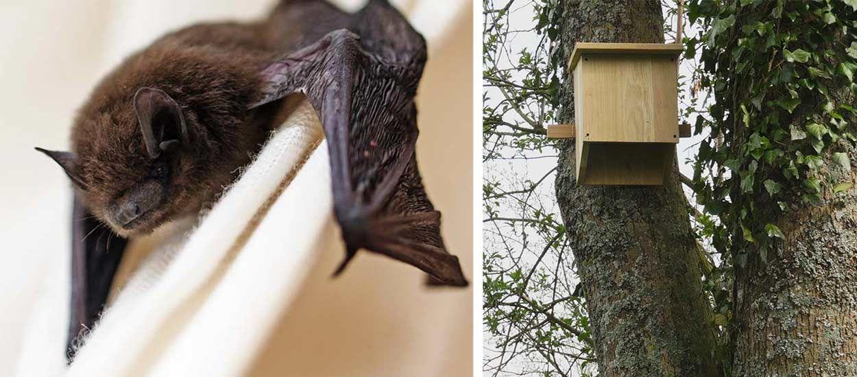Tuto : Fabriquez un petit abri à chauves-souris et favorisez la biodiversité !