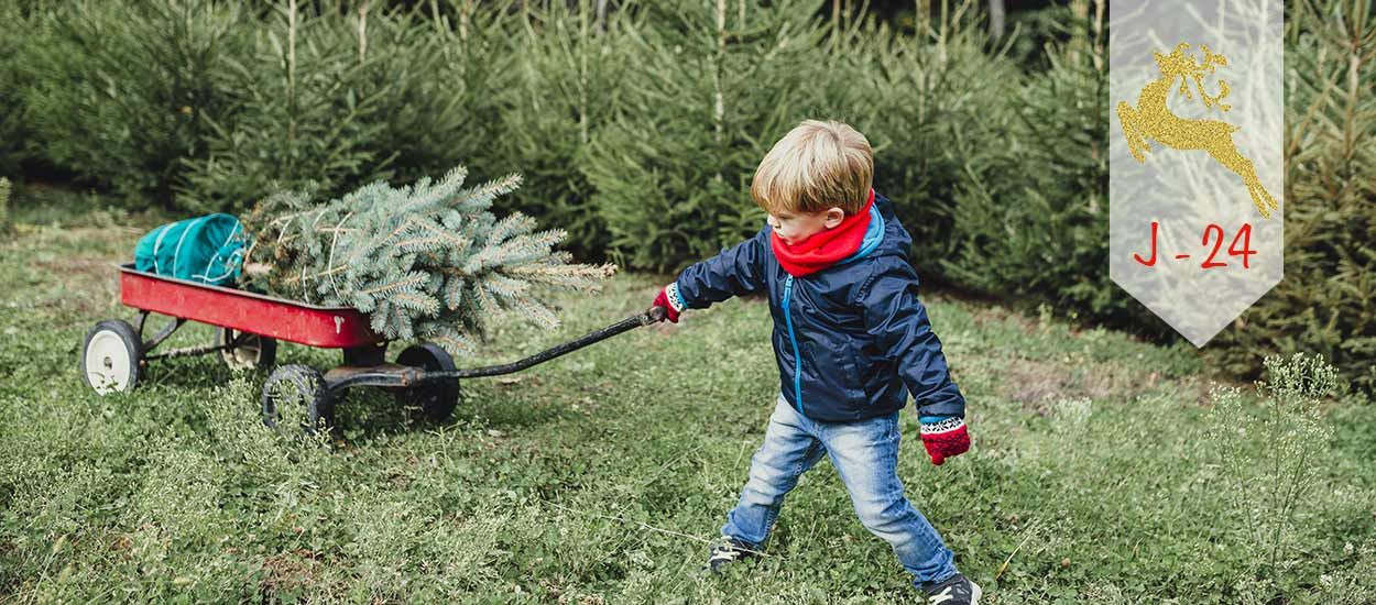 J-24 : Petit guide pour choisir votre sapin de Noël